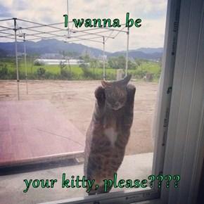 I wanna be  your kitty, please????