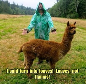 I  said  turn  into  loaves!   Loaves,  not  llamas!