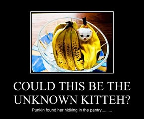 COULD THIS BE THE UNKNOWN KITTEH?