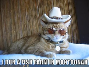 I RUN A FISH FARM IN MONTOONAH