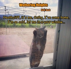 Heathcliff, it's me, Cathy, I've come home,  I'm so cold, let me in-a-your window...