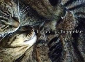 I need nothing else.