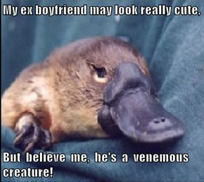 My ex boyfriend may look really cute,  But  believe  me,  he's  a  venemous  creature!