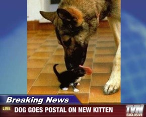 Breaking News -  DOG GOES POSTAL ON NEW KITTEN