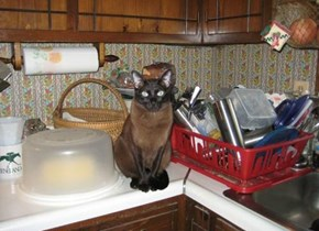 Tupperware Cat  ( cool Kitchen )