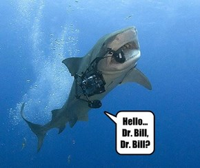 "Dr. Bill Rosenthal And His ""Talk To The Sharks"" Experiment Was A Complete Failure"