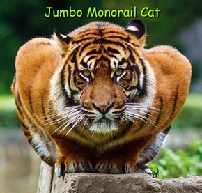 Jumbo Monorail Cat