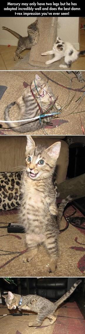 Mercury the T-Rex Cat