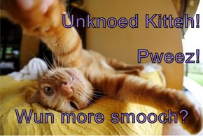 Unknoed Kitteh!                                                   Pweez!                                                     Wun more smooch?