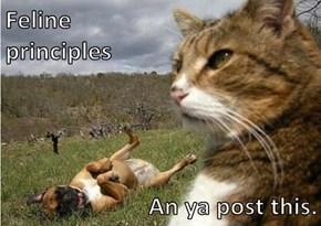 Feline                                                   principles    An ya post this.
