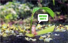 AMPHIBS AHOY !!