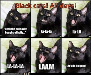 Black cats! All days!