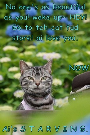 No one's as beautiful as you! wake up~ HEY! Go to teh cat fud store! ai love you. NOW Ai's S T A R V I N G.