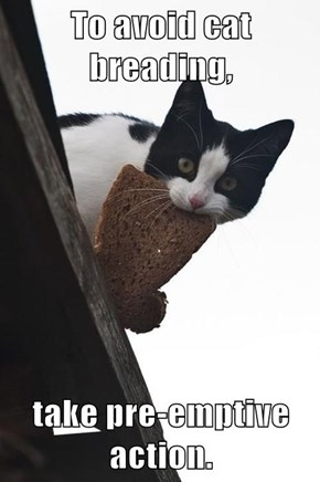 To avoid cat breading,  take pre-emptive action.