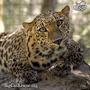 Happy Sunday from Leopard Sisters, Jade & Armani