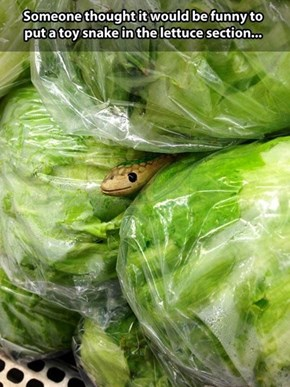 Lettuce? More Like Letusssssssssss...