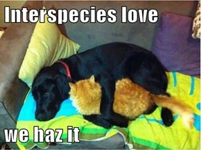 Interspecies love  we haz it