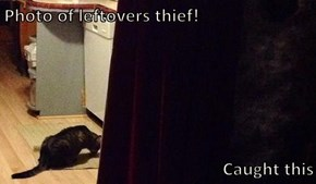 Photo of leftovers thief!   Caught this
