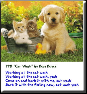 """Cat Wash"" (TTO ""Car Wash"" by Rose Royce)"