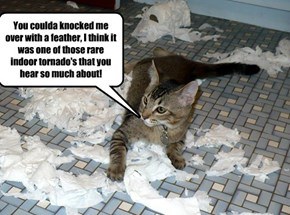 When cats have to come up with a quick story!