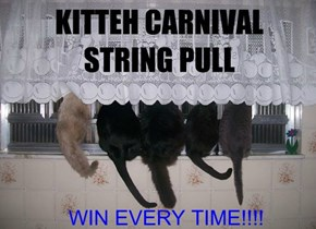 Come to the Kitteh Carnival! Fun and Games Fur All!