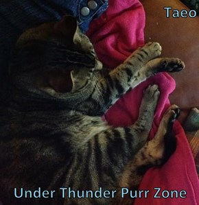 Taeo  Under Thunder Purr Zone