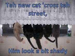 Teh new cat 'cross teh street,   Him look a bit shady