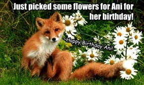 Happy Birthday friend Ani! Foxy will be over for cake n' head bonx!