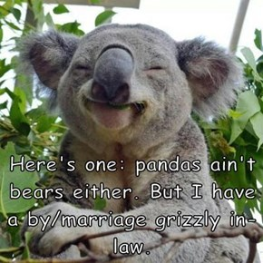 Here's one: pandas ain't bears either. But I have a by/marriage grizzly in-law.