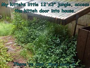 "My kittehs little 12'x3"" jungle, access thu kitteh door into house.   There're cool, they noes it."