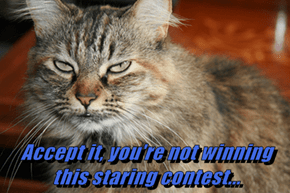 Accept it, you're not winning this staring contest...