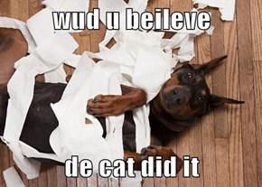 wud u beileve   de cat did it