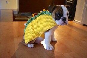 I Don't Wanna Be a Taco