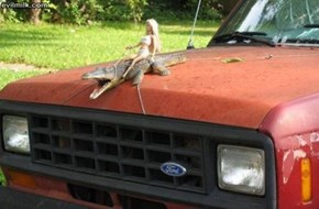 Redneck Hood Ornament