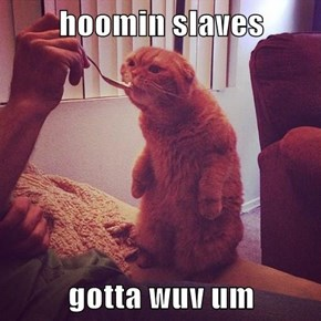 hoomin slaves  gotta wuv um