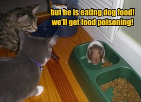 but he is eating dog food! we'll get food poisoning!