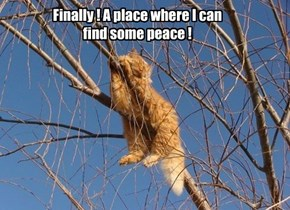 Finally ! A place where I can find some peace !