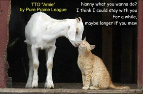 """Kitty Got His Goat"" (TTO ""Amie"" by Pure Prairie League)"