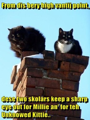 From dis bery high vantij point,  dese two skolars keep a sharp eye out for Millie an' for teh Unknowed Kittie..