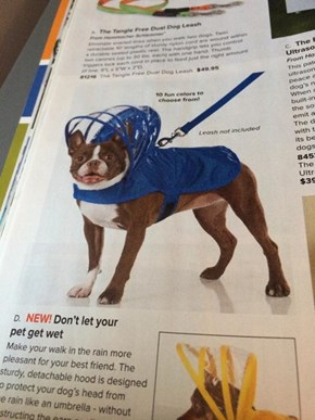Now Your Pet Can Stay Dry AND Stylish