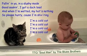 """Cat vs Bath"" (TTO ""Soul Man"" by The Blues Brothers)"