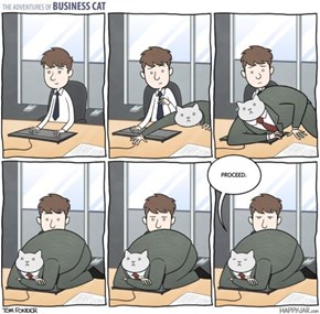 Business Cat's Management Skills Are a Step Beyond