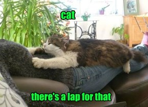 The Best Naps are Had On Laps
