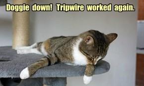 Doggie  down!   Tripwire  worked  again.