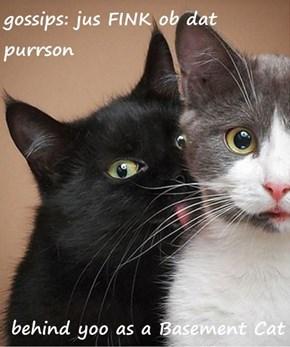 gossips: jus FINK ob dat purrson   behind yoo as a Basement Cat