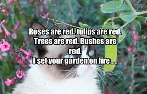 Rosesare red