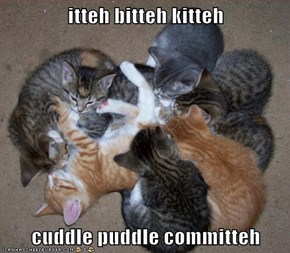 itteh bitteh kitteh  cuddle puddle committeh