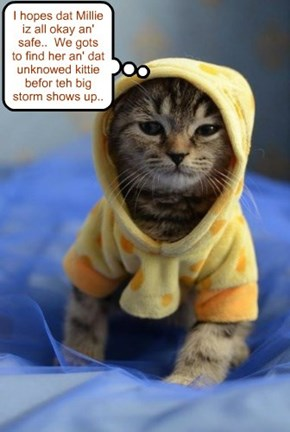 Robin Banks puts on his hoodie befor joining up wiff Bosco an' Kibby to search for Millie an' teh Unknown Kittie..