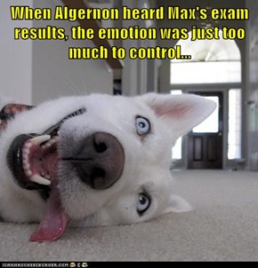 When Algernon heard Max's exam results, the emotion was just too much to control...
