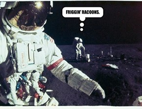 FRIGGIN' RACOONS.